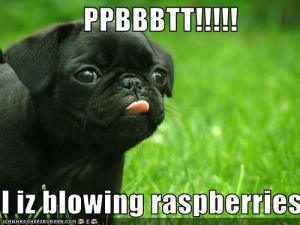 Blowing-Raspberries